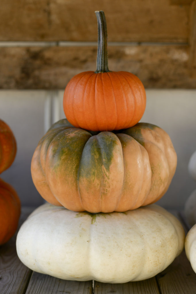 The Perfect Pumpkin Patch