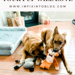 Top 10 Best Dog Toys on Amazon your Pup Will Love